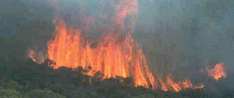 an essay on nsw bushfires in 1994